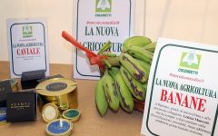 banane sicilia made in italy