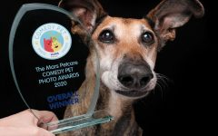 Comedy Pet Photo Awards: vince il cane che fa la linguaccia