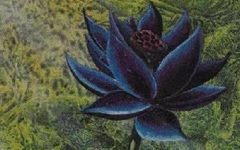 "La carta ""Black Lotus"" di Magic: The Gathering battuta all'asta per oltre 500mila dollari: caratteristica unica è l'autografo di Christopher Rush"