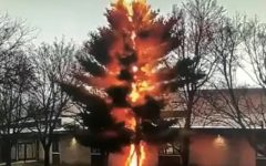 Video fulmine distrugge albero