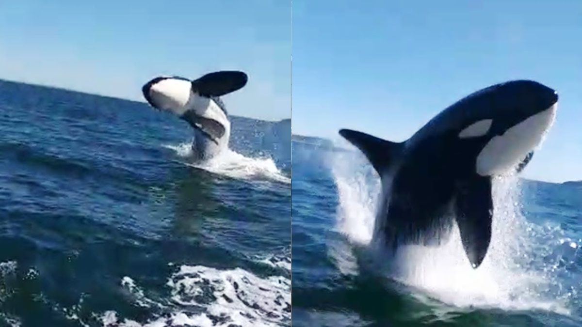 Video orca Cile, social network